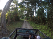 Jeep safari at Kaziranga National Park
