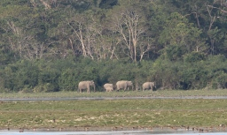 A family of wild elephants.